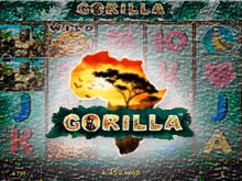 Gorilla онлайн на деньги
